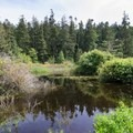 A small pond near the bay hosts wildlife.- Bowman Bay