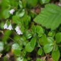 Unidentified species (help us identify it by providing feedback).- Lottie Bay