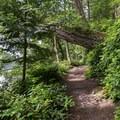 Trail around Lottie Bay.- Lottie Bay