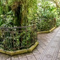 A tropical jungle in the city.- Conservatory of Flowers