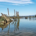 Remnants of the past.- Elkhorn Slough
