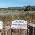 Informative displays teach about the wetlands.- Año Nuevo Point Trail