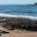 The old light station on Año Nuevo Island.- Elephant Seals of Año Nuevo