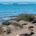 - Elephant Seals of Año Nuevo