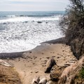 A secluded cove suits these young seals.- Elephant Seals of Año Nuevo
