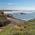 A few elephant seals basking in a tiny cove.- Atkinson Bluff Trail