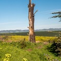 Some sites have a view of the agricultural fields nearby.- Sunset State Beach Campground