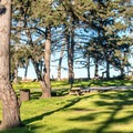 Many large trees shade the campsites.- Sunset State Beach Campground