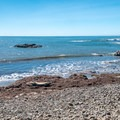 Elephant seals basking in the sun.- Whitehouse Creek Beach