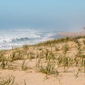 Beach grasses blow in the nearly constant wind.- Pescadero State Beach