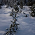 View of Mount Washington from along the multi-use route to the lake.- Big Lake Snowshoe