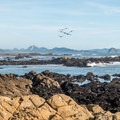 Looking toward the town of Morro Bay and Morro Rock.- Estero Bluffs State Park