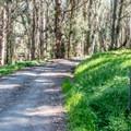 Road to sites #1 and #2.- Montana de Oro Environmental Campsites