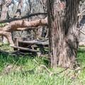Environmental campsite.- Montana de Oro Environmental Campsites