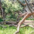 Camping among the eucalyptus.- Montana de Oro Environmental Campsites