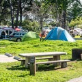 Tent campsites.- Morro Bay State Park Campground