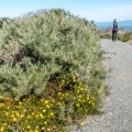 Wildflowers are striking in March.- Sand Spit Day Use Area