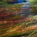 Oak Grove Fork on the Clackamas River.- Clackamas Lake