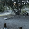 Typical campsite at Big Rock Campground.- Big Rock Campground
