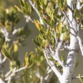Unidentified species (help us identify by providing feedback).- Windy Gap Trail Hike