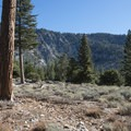 Starting off through loose patches of ponderosa pines (Pinus ponderosa).- Windy Gap Trail Hike