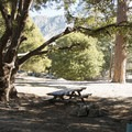 Typical campsite at Crystal Lake Recreation Area Campground.- Crystal Lake Recreation Area Campground