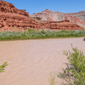 This lush riparian zone seems out of place in the vast desert.- Mexican Hat Rock