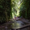 The mile-long Fern Canyon Trail crosses Home Creek on a series of footbridges within the canyon corridor.- Fern Canyon