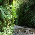 A sea of fern and mosses line the canyon walls.- Fern Canyon