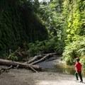 Fern Canyon Trail.- Fern Canyon