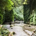 Fern Canyon, Prairie Creek Redwoods State Park.- Fern Canyon