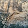 The canyon walls tower over the trailside flora.- Santa Elena Canyon