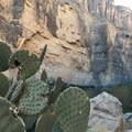 Cacti are common along the banks of the Rio Grande.- Santa Elena Canyon