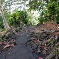 Nature meets pavement on the way to the caves.- Wai'ānapanapa State Park