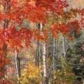 Fall colors.- High Falls Gorge