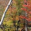 Falls colors.- High Falls Gorge