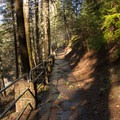 The trail heading back to the day use area.- McArthur-Burney Falls Memorial State Park