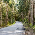 The road to Costanoa Lodge.- Costanoa Lodge