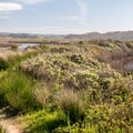 The trail threads between waterways.- Pescadero Marsh Natural Preserve