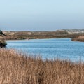 Looking back toward the beach.- Pescadero Marsh Natural Preserve