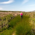 The trail through Pescadero Marsh.- Pescadero Marsh Natural Preserve