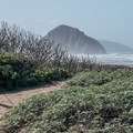 Paths to the beach are nearby.- Morro Strand Campground