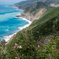 Wildflowers along the Big Sur coastline.- Kirk Creek / Vicente Flat Trail
