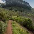 A small stand of redwoods struggles in a microclimate.- Kirk Creek / Vicente Flat Trail