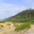 View of the campground looking north.- Gold Bluffs Beach Campground