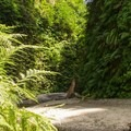 Fern Canyon.- Fern Canyon