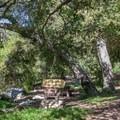 The trail runs through Millard Trail Camp.- Millard Falls Hike