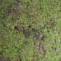 Moss growing along the trail.- Millard Falls Hike