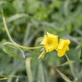 Unidentified species (help us identify it by providing feedback).- Millard Falls Hike