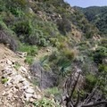Rubio Canyon Trail slowly becomes less established.- Rubio Canyon